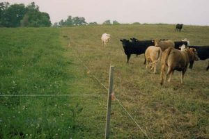 Mt. Folly Farm has had a good Rotational Grazing Program for Decades